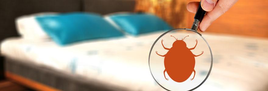 Problèmes de punaises de lit